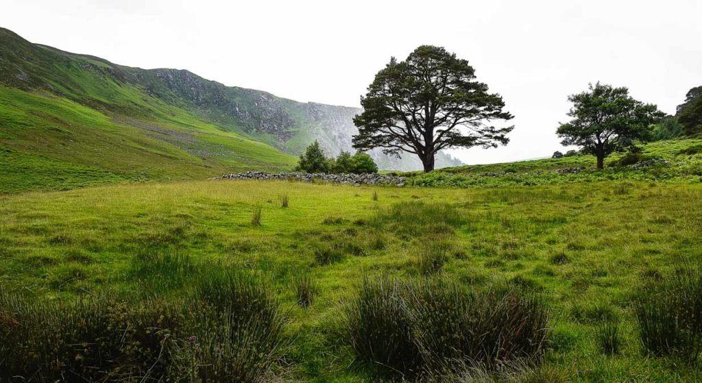 Irish Tree | Calgary Landscape Photographer | SLIVER Photography