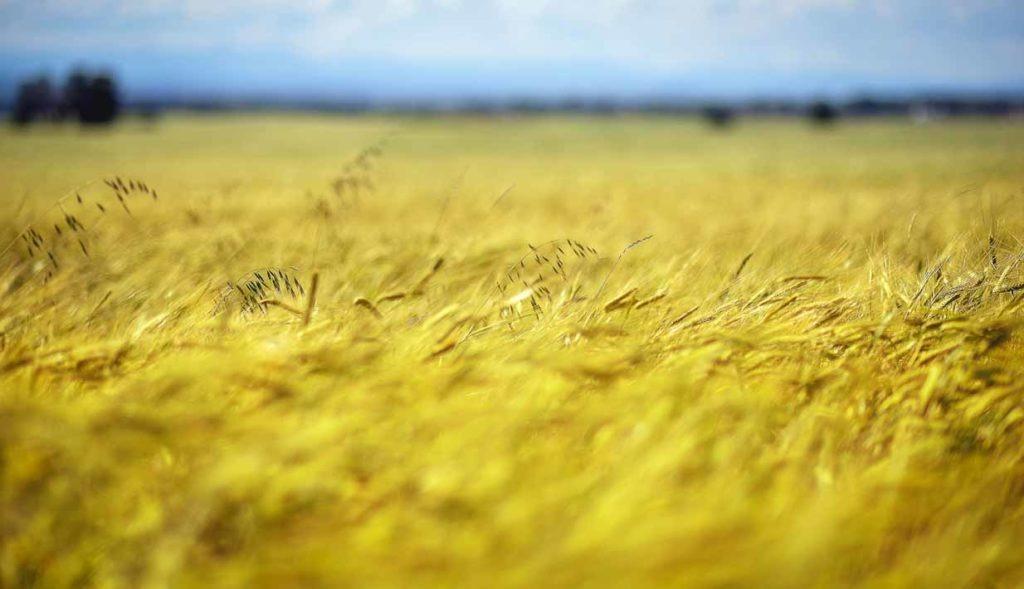 Harvest | Calgary Landscape Photographer | SLIVER Photography