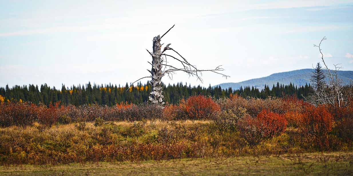 Lone Tree | Calgary Landscape Photographer | SLIVER Photography