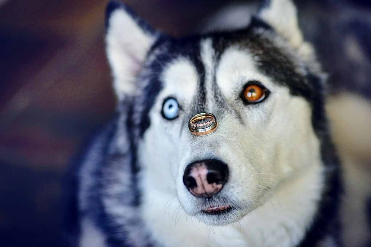 Dog with Rings on nose | Calgary Wedding Photographer | SLIVER Photography